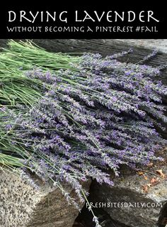 """Drying your own lavender without becoming a """"Pinterest #fail"""" (with a video bonus) 