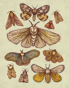 Kate O'Hara Illustration: A pattern design inspired by the many different, beautiful species of moths. Painting & Drawing, Moth Drawing, Bugs Drawing, Botanical Illustration, Illustration Art, Illustrations, Botanical Art, Insect Art, New Wall