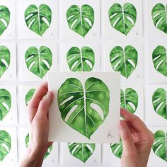 in watercolor  by botanical artist @livingpattern. #Greenery
