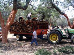 Cork harvest Portugal, Cork Tree, Harvest, Trees, Corks, Wood