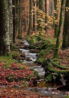 Forest Photo, Stream in the Woods, Autumn Nature Photo... Wallpaper... By Artist Unknown...