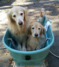 Big mistake, I asked who wanted to be first for spa day!