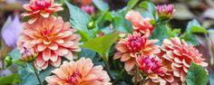 Minha planta está doente e agora? Veja dicas de como cuidar do jardim - O jardim não vai bem e você não sabe o que fazer? Muitas vezes a forma de resolver o problema das plantas é mais fácil do que se imagina: primeiro, identifique se há alguma condição ambiental insatisfatória para a espécie atacada e os sintomas apresentados (se está murcha, apodrecida ou com estru... - http://www.ecoadubo.blog.br/ecoblog/2014/10/18/minha-planta-esta-doente-e-agora-veja-dicas-de