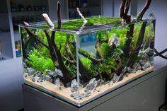 Akwaria w stylu naturalnym