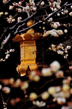 典雅Kyoto
