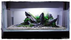 Nano Aquarium, Aquarium Design, Planted Aquarium, Aquarium Fish, Takashi Amano, Fish Aquarium Decorations, Nano Cube, Nano Tank, Aquatic Plants