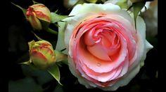 Linda Música Tradução românticas traduzidas Michael Bolton all for love ...