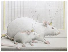 "Jane Lewis ""Earthlings - Laboratory Mouse & Rat"" (graphite and coloured pencil on paper) Jane Lewis, House Mouse, Coloured Pencils, Rats, Graphite, Two By Two, Gallery, Paper, Animals"