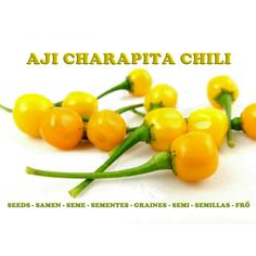 Aji CHARAPITA chili Seeds World's Most Expensive Chili  3,95€  Aji CHARAPITA chili Seeds World's Most Expensive Chili Price for Package of 5 seeds. You should never judge a pepper by its size, especially when it comes to price. The Aji Charapita chili pepper grows is roughly the size of a pea, but there's nothing small about its price. A kilogram of this stuff will set you back a whopping 20,000 Euro.Native to the jungles of norther Peru, the Aji
