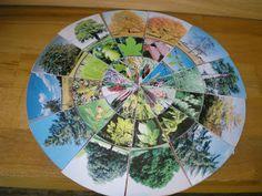 Kruschkiste: Kleiner Legekreis Waldbäume