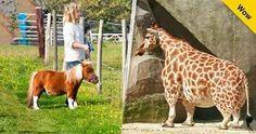 Los Animales Enanos nos dejan ver lo hermosa que es la naturaleza Los animales…