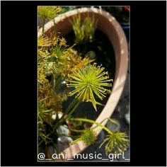 #green #water #natur #gold