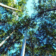 【expect0820】さんのInstagramをピンしています。 《木の香り、木の建物、木の食器🌳自然の素材が好きだけど木を切ってまで使ってるってそれは自然が好きな事なのか?と考えた(笑)と言ったところで何も変わらないから物を大切に使おう🌳(笑)てか何言ってんだ私(笑)  #木 #森 #山 #オリンパス  #omd  #写真好きな人と繋がりたい  #カメラ》