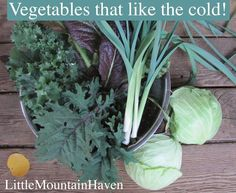Cool Season & Cold Hardy Vegetables #homesteading