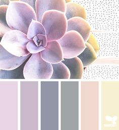 { succulent hues } image via: @chrismoon1969