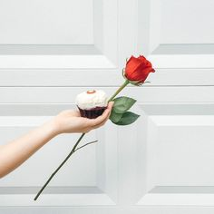 We're not sure who will accept the final rose but we do know that we'll always accept @sprinklescupskes  #bachelorettefinale  #LivingTN