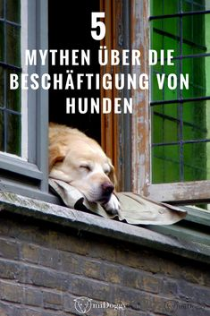 #Hunde    #Hund    Mythen    Beschäftigung    Auslastung    Tipps    Tricks    Ideen    Bilder
