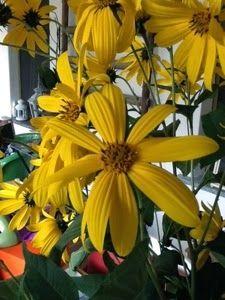 Stress da giardino: Topinambur