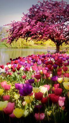 The Botanical Gardens . the Botanical Gardens . Chicago Botanic Garden with 27 Spectacular Gardens On 385 Garden Images, Garden Pictures, Garden Photos, Nature Pictures, Beautiful Nature Wallpaper, Beautiful Landscapes, Beautiful Gardens, Chicago Botanic Garden, Love Garden