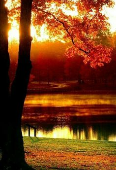 Autumn Beauty my favorite time of the year Fall Pictures, Pretty Pictures, Fall Images, Beautiful World, Beautiful Places, Beautiful Scenery, Autumn Scenes, Belle Photo, Beautiful Landscapes