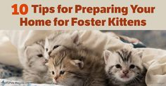 Fostering kittens is a wonderful way to make a difference in the lives of this tiny animals, but it's important to prepare ahead of time for their arrivals. http://healthypets.mercola.com/sites/healthypets/archive/2017/05/20/foster-kittens.aspx?utm_source=petsnl&utm_medium=email&utm_content=art1&utm_campaign=20170520Z1&et_cid=DM143491&et_rid=2013552081