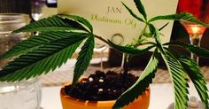 Marijuana Is Now Becoming A Fixture At Washington And Colorado Weddings