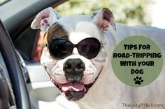 Tips For Road-Trippi