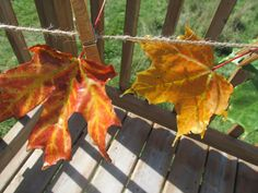 Preserving leaves with beeswax: An easy, beautiful and great smelling #waldorf inspired fall craft! {The Usual Mayhem}