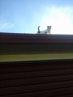 On top of garage not knowing what he's got himself into...