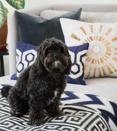 www.littlerugshop.com Pooch stole the show from our pillows.  @sivanayla by jonathanadler