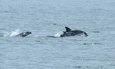 Former Captive Dolphin Gives Birth in the Wild Proving There is Life After the Tank