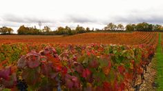 Couleurs d'automne en vallée du Lot https://photos.thierry-dollon.net?utm_content=buffere9195&utm_medium=social&utm_source=pinterest.com&utm_campaign=buffer #followme #thierrydollon #photodujour #lot #sudouest #cahors #valleedulot