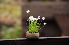 2013-5-1 | tiny flowers, so cute :) もっと見る