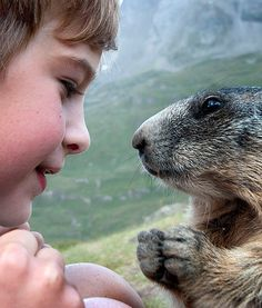 8-Year-Old Has Amazing Friendship With Alpine Marmots - PawNation