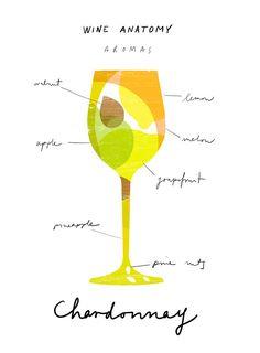 Wine Anatomy print - Chardonnay