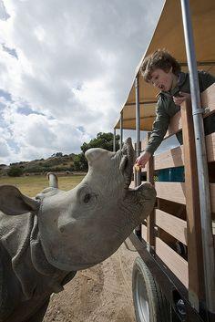 rhino ♥