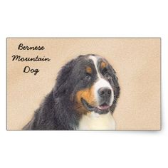 #Bernese Mountain Dog Rectangular Sticker - #bernese #mountain #dog #puppy #dog #dogs #pet #pets #cute #bernesemountaindog