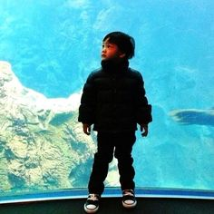 A curious little boy at the Osaka Aquarium,one of Japan's most spectacular aquariums - @sasina- #webstagram
