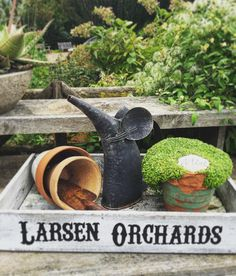 How sweet is this garden tray and display? Wouldn't you want this in your backyard? Another lovely botanical garden image. #gardening #planters