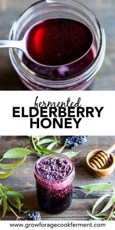 Make this fermented elderberry honey this fall and winter season to help with cold and flu. Use foraged elderberries to make this great tasting herbal remedy! #elderberry #honey #fermented #ferment #forage #elderberries #herbalism #fallrecipes #naturalremedy Elderberry Honey, Elderberry Recipes, Elderberry Ideas, Elderberry Plant, Natural Health Remedies, Herbal Remedies, Fall Recipes, Real Food Recipes, Fermented Foods
