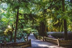 Costas, Julia and Francesca from Langley, BC share their visit to Cathedral Grove in MacMillan Provincial Park on Vancouver Island. Vancouver Island, Jurassic Park, Cathedral, Places, Outdoor Decor, Beautiful, Cathedrals, Lugares