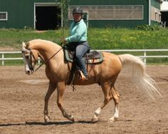 Notes From Julie ~ Learn to Ride the Canter   Western Dressage Association® of America