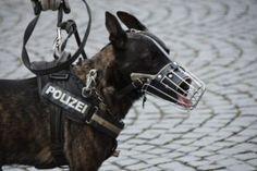 19 Brave Police & Military Dog Breeds (best Police Dogs) on Amazing Dog Photo Ideas 7077 Bloodhound Dogs, Doberman Dogs, Rottweiler Dog, Police Dog Breeds, Police Dogs, Police Police, Golden Retrievers, Pincher Dog, Dog Breeds List