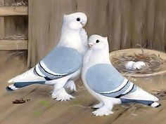 Two lovely and romantic love birds! Kinds Of Birds, All Birds, Cute Birds, Pretty Birds, Beautiful Birds, Animals Beautiful, Beautiful Couple, Simply Beautiful, Exotic Birds