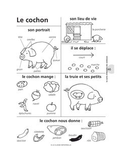Aperçu du fichier cm148_fiches_animaux.pdf Science For Kids, Science Activities, Life Science, Toddler Activities, Colegio Ideas, Fun Facts About Animals, Animal Worksheets, French Classroom, Learning Italian