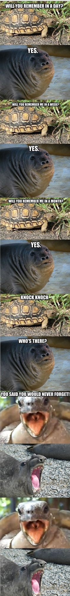 The Tortoise and the Sea-Elephant. Moral of the Story: Never Forget. (Huh. but an ELEPHANT SEAL, tho.)