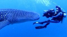 Tara Reid Confuses Us All With Her Explanation of Whale Sharks [Video]