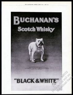 1912 Black & White Scotch whisky Champion Bulldog photo vintage print ad. Pinned by Judi Crowe.
