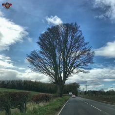 #tree_magic #tree_brilliance #treesofinstagram #fiftyshades_of_nature #sky #rsa_nature #rsa_rural Photos from my travels