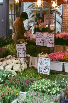 Deze pin is ontdekt door monica frings. Columbia Road Flower Market, Flowers For Sale, London Places, Blossom Flower, Fresh Flowers, Along The Way, How To Look Pretty, Healthy Dinner Recipes, Free Food